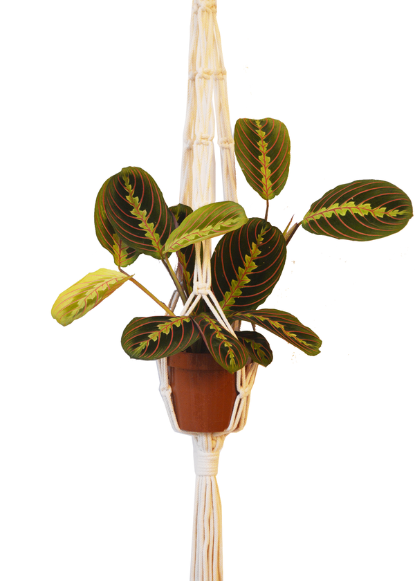 Sustainable cotton macramé plant hanger - Natural