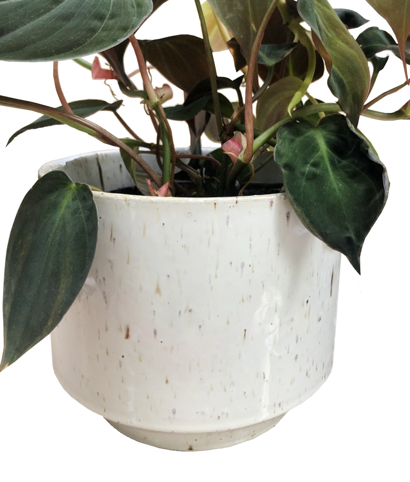 white speckle ceramic plant pot with plant London plant shop cuemars