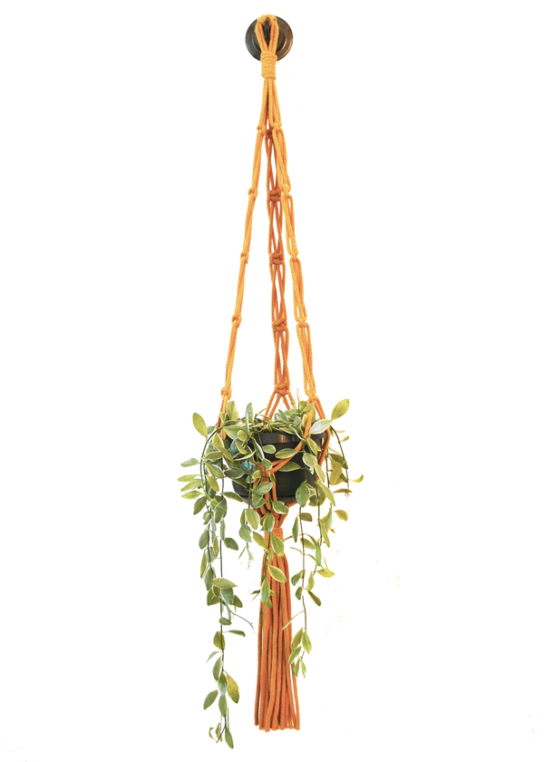 Sustainable cotton macramé plant hanger - Mustard