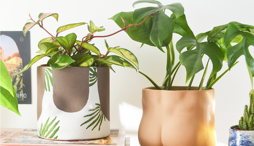 Group Partner Bikini Planter and Nude Planter with a Hoya plant and a Monstera Adansonii
