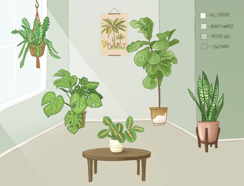 How to determine Sunlight levels for plants graphic showing different levels of sun exposure with plants illustrated in each of the levels