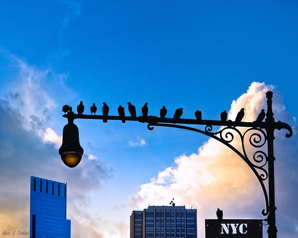 Birds of New York City Art Print