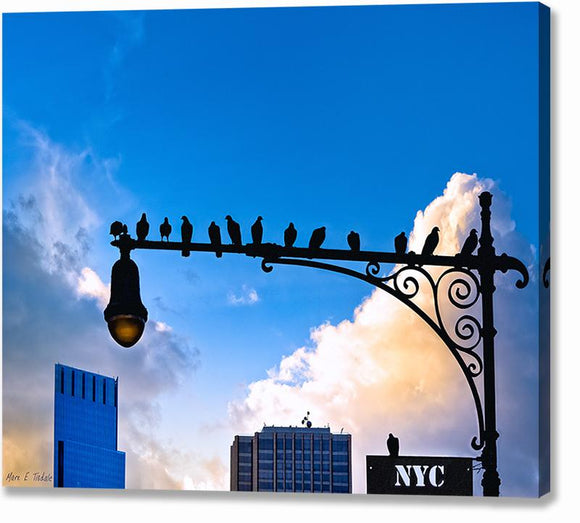 Birds of New York City Canvas Print
