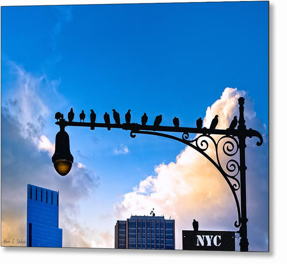 Birds of New York City Metal Print