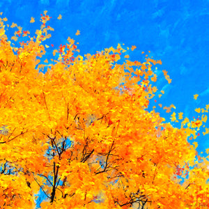 Colorful Abstract - Fall Leaves Art Print