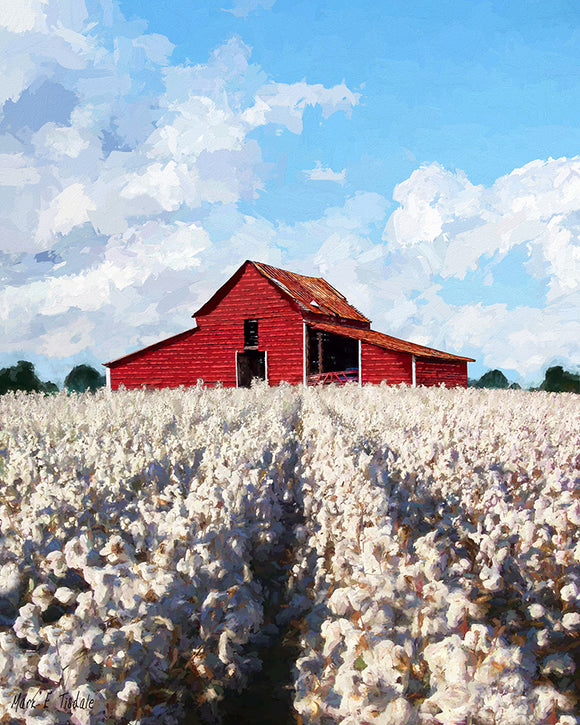 Cotton Ready For Harvest - Georgia Art Print