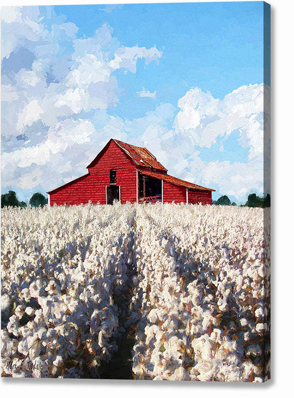 Cotton Ready For Harvest - Georgia Canvas Print