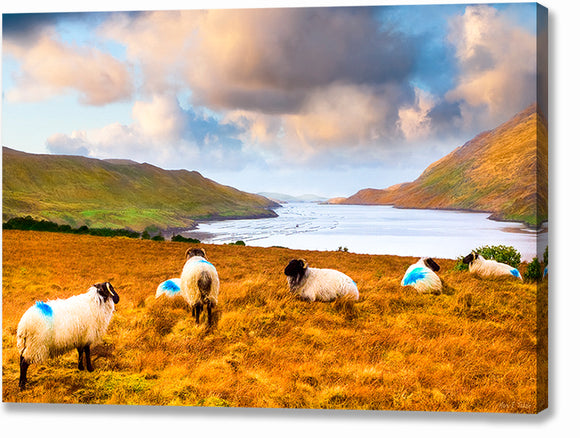 Sheep Grazing by the Sea - Irish Landscape Canvas Print