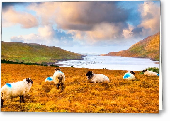Sheep Grazing by the Sea - Irish Landscape Greeting Card