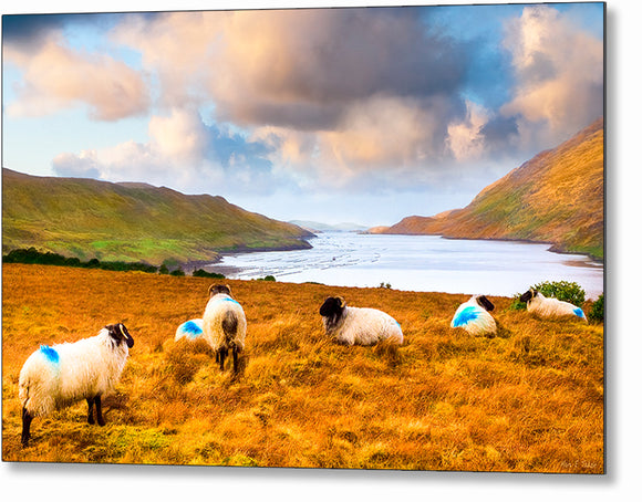 Sheep Grazing by the Sea - Irish Landscape Metal Print