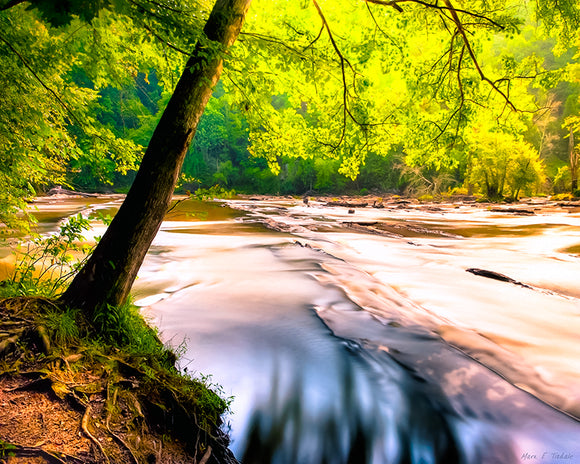 Sweetwater Creek - Georgia Landscape Art Print