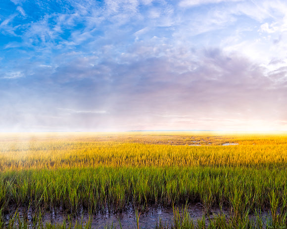 Tidal Marshes - Georgia Coast Art Print