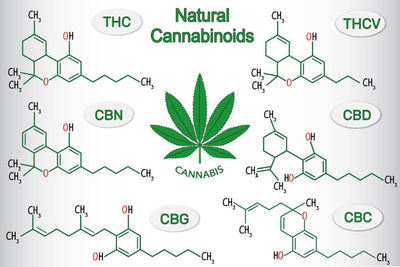 CBG, CBN, CBC, CBDV: Meet the Other Cannabinoids