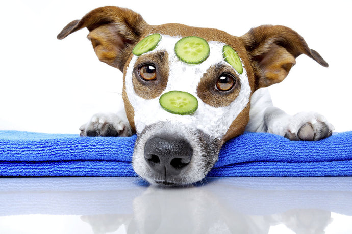 How to help your dog's itchy skin