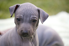 BEST DOG SHAMPOO FOR HAIRLESS COAT