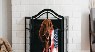 Keep Your Pet Safe and Comfortable on the 4th of July