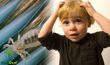 Load image into Gallery viewer, LiceTex™ Automatic Head Lice Eliminator