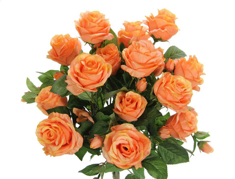 Premium Orange Rose Bush with 15 Roses-5 available colors