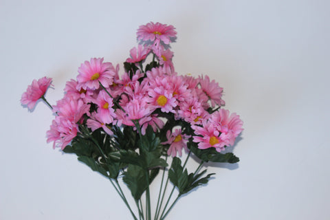 Premium Miniature Daisy Bush- Light Pink