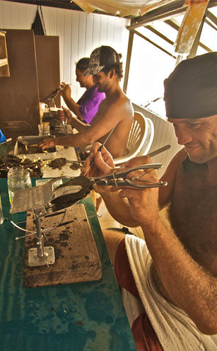 Grafting Tahitian pearls at Kamoka