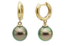 Golden green peacock Tahitian pearl hoop earrings