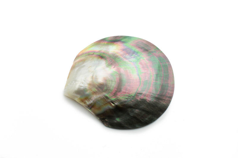 Polished Tahitian black pearl oyster shell
