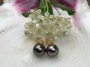 Aubergine Peacock Tahitian Pearl Stud Earrings