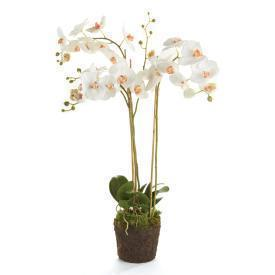 "Phalaenopsis 31"" Orchid Drop In White"