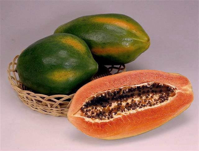 Free Shipping - Red Lady Papaya Great Fruit Tree -1 Plant - 2 to 3 Feet Tall - Ship in 3 Gal Pot