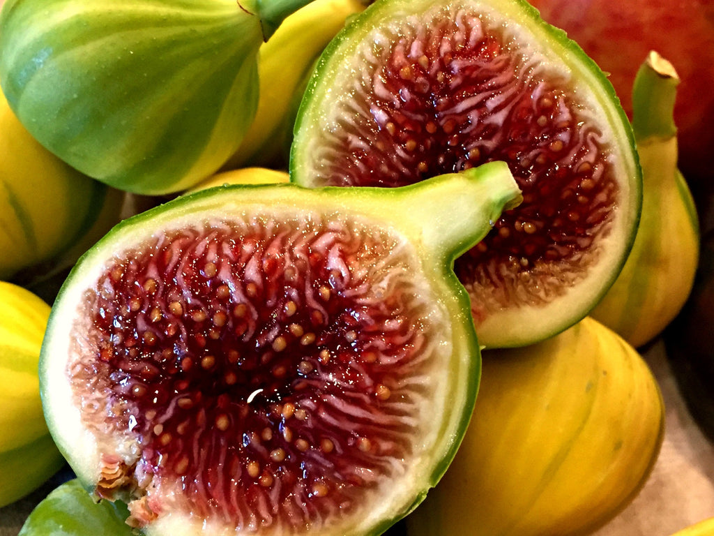 Free Shipping - Fig 'Panache'  - 1 Plants -  2  to 3 Feet Fall -  Ship in 3 Gal Pot