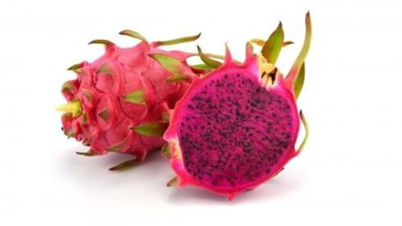 Free Shipping - Dragon Fruit 'American Beauty' - 1 Plant -  1 Feet Tall - Ship in 1 Gal Pot