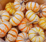 Mini Striped Pumpkin Seeds (10 cnt)