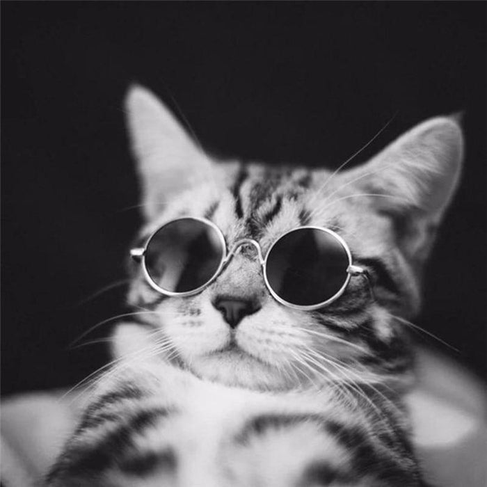 Ultra-Cute Pet Sunglasses