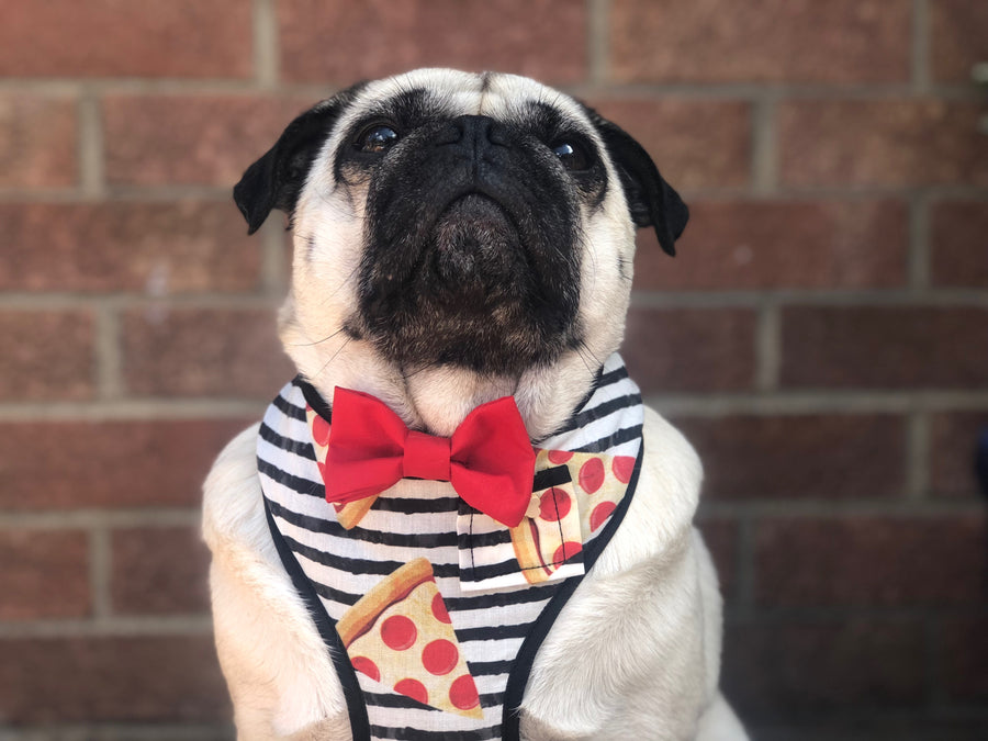 Sir Domino - Hand-made, pizza print harness with red bow-tie, pocket and bone button – XS, S, M, L & Custom