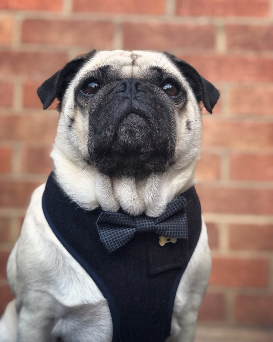 Sir Bill - Hand-made, luxury dark navy fabric harness with grey and navy silk bow-tie, pocket and bone button – XS, S, M, L, XL & Custom