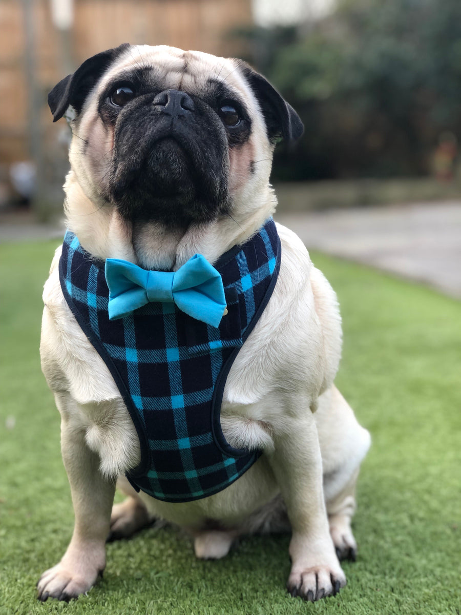 Sir Barnaby - Hand-made, plaid harness with blue bow-tie, pocket and bone button – XS, S, M, L & Custom