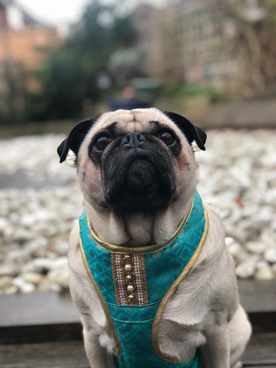 Indian Summer - Turquoise Bollywood style harness with luxury Indian fabric - XS, S, M, L, XL & Custom