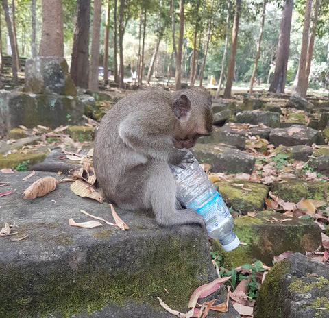 monkey biting empty water bottle