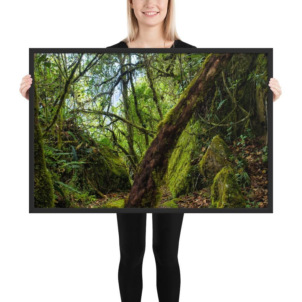 Forrest Minuet - Framed Fine Art Print | 10 - 36 Sizes - Black / 24×36 - Prints