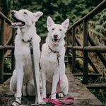 Wilderdog - Waterproof Leash [Plum]