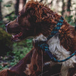 Wilderdog - Climbing Rope Collars [Granite]