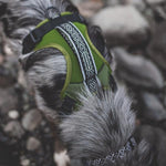 Wilderdog Olive Harness Med/Large
