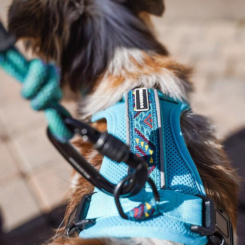Wilderdog Harness [Teal]