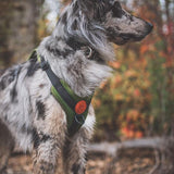 Wilderdog Olive Harness