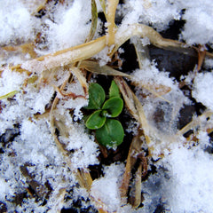 Seed Starting 101: Sowing in the Snow