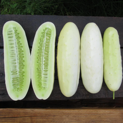 Plant Personality: Cute Cukes