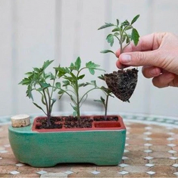 Seven Tips for Indoor Sowing