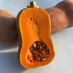 The Story Of A Seed: Honeynut Squash