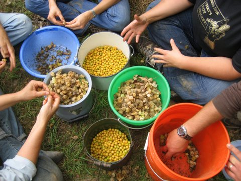 We're grateful for the many hands that make the Seed Library possible.