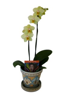 04_orchid-1